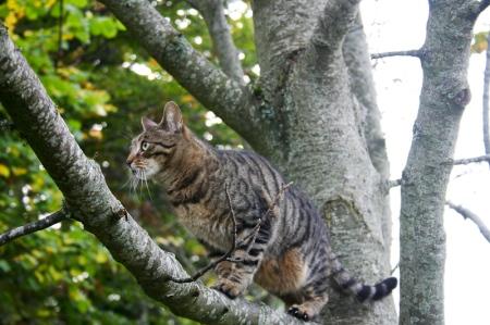 Lulu - hunting in Glenlivet
